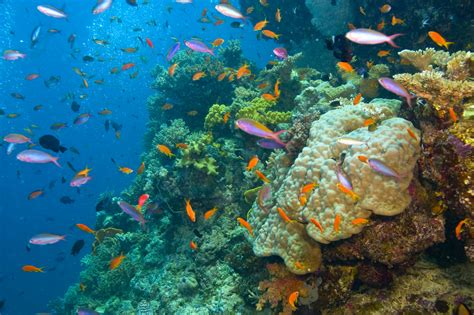 the the great barrier reef of australia its products and potentialities containing an account with copious coloured and photographic illustrations and coral reefs pearl and pearl shell bãªch books the adventurer s list top 50 places to explore