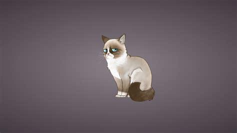 wallpaper grumpy cat grumpy cat wallpaper 29563