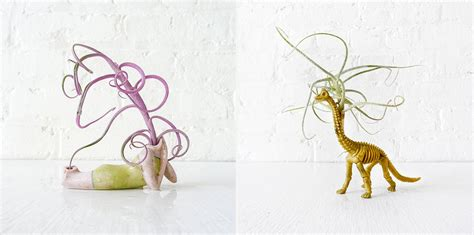 Air Plant Vases New Ways To House Air Plants Cool Hunting