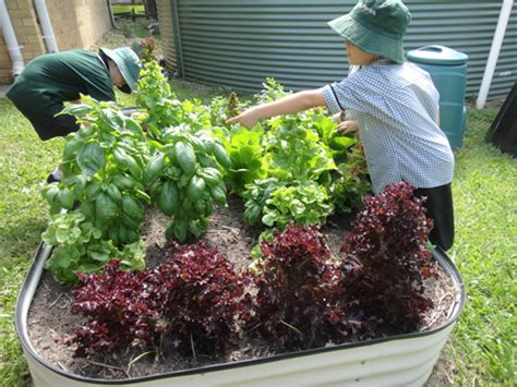 School Vegetable Garden School Vegetable Garden