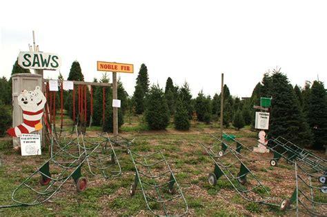 u cut christmas tree farms in sebastopol marin mommies