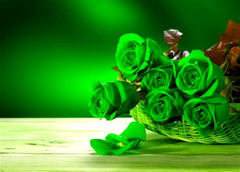 green wallpaper meaning the meaning and top 19 beautiful green roses green rose