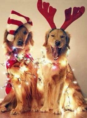 imagenes animales navidad perros gatos conejos y 22 mascotas con disfraces de