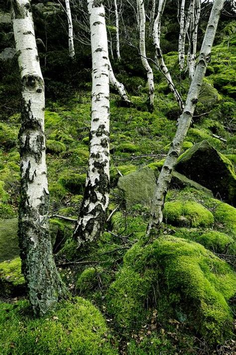 Birches Garden Germany by 14 Diy Ideas For Your Garden Decoration 1 Beautiful