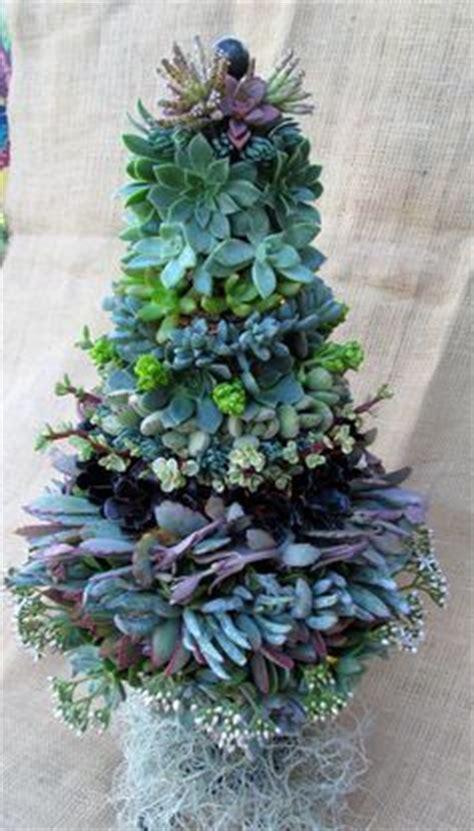 succulent christmas tree home design garden