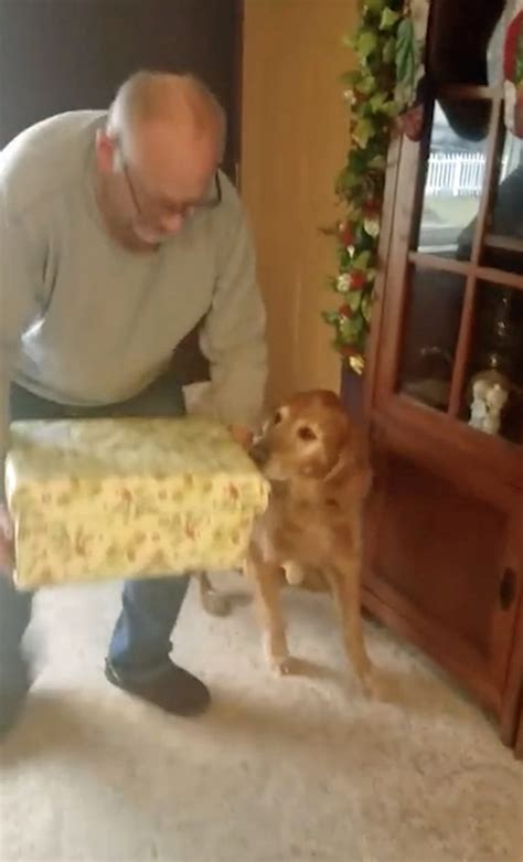 golden retriever died suddenly merry pupmas adorable moment list is surprised with a friend when