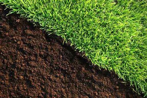 Welche Pilze Wachsen Im Garten Auf Der Wiese by Rasenbegrenzung Mit Englischer