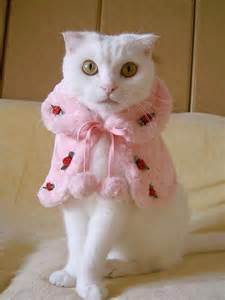 Cats in ridiculous costumes amazing incredible
