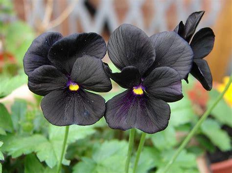 1000 ideas about black flower tattoos on pinterest leg tattoos for women flower tattoos and