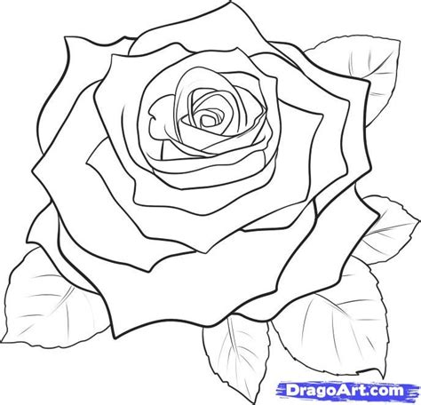 drawing pattern of rose best 25 easy rose drawing ideas on pinterest easy to
