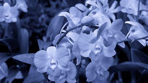 Full HD Wallpaper orchid black and white bud, Desktop
