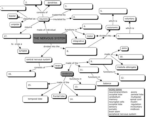 cell concept map answers nervous system concept map