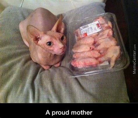Hairless Cat Meme - chicken wings memes best collection of funny chicken
