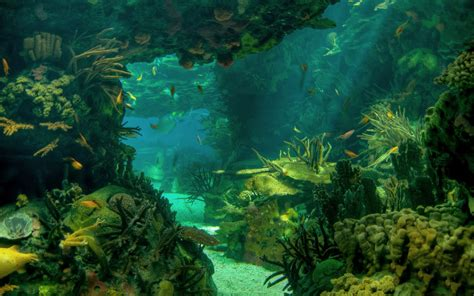 wallpaper abyss earth underwater full hd wallpaper and background 2560x1600