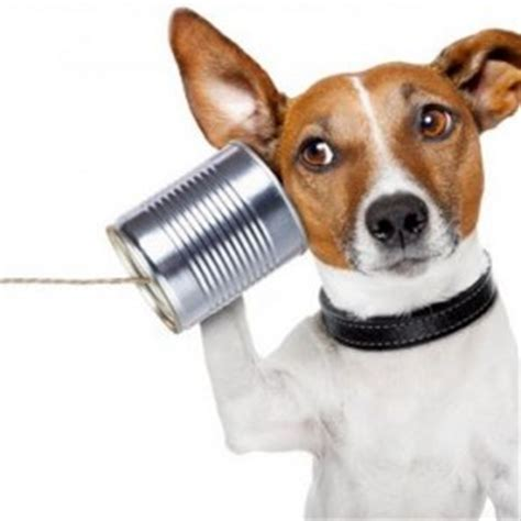 how do dogs communicate behavior archives new owners