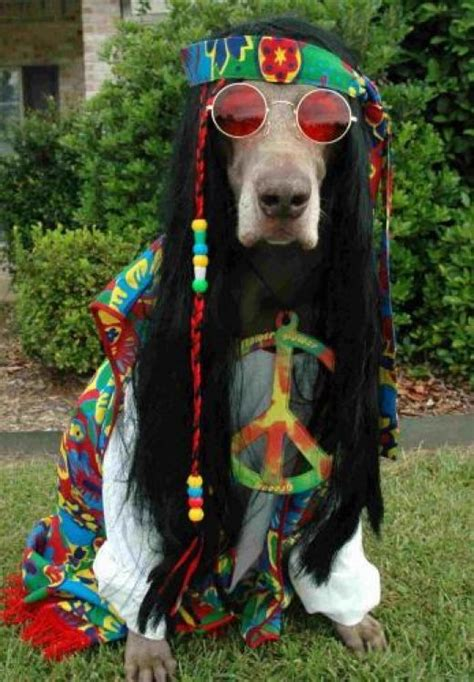 peace puppies peace and quot peace out quot