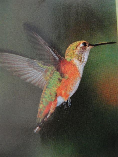 central florida gardener are the hummingbirds still here