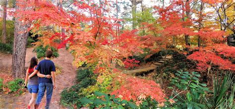 japanese maple shade pathway by the japanese maple trees in the shade garden of