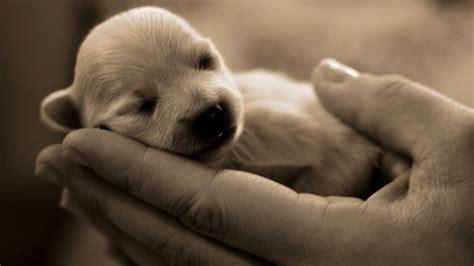 really puppies puppies pictures really puppies puppy