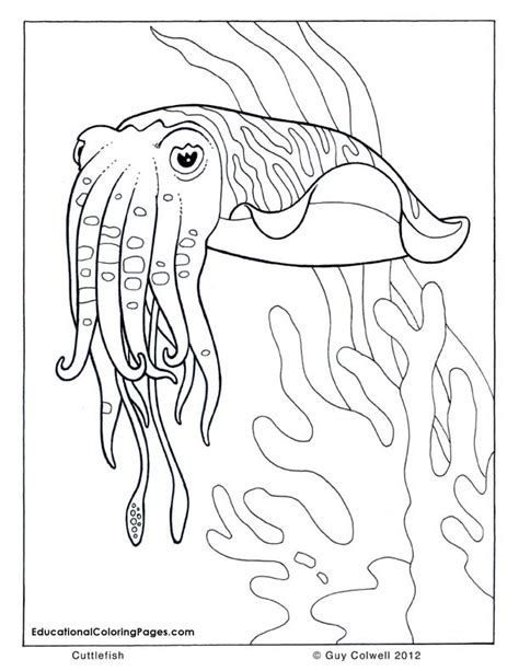 sea and seashore book one 171 animal coloring pages for kids
