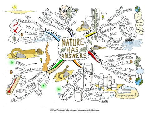 patterns in nature mind map nature has answers mind map
