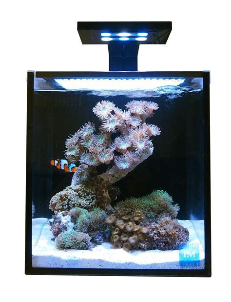 saltwater fish tank lights 10 nuvo fusion tank with skkye led light innovative