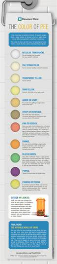 pregnancy urine color what the color of your urine says about you infographic