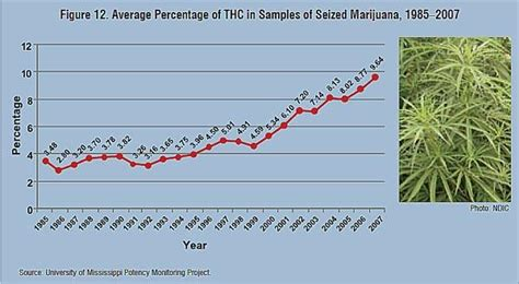 Marijuana Detox Period by Thc Percentages On The Rise But What The Hell Do They