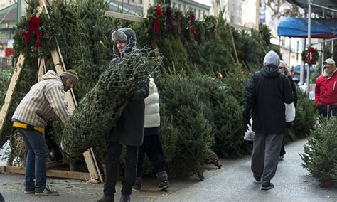 cost of xmax tree in usa tree prices to spike by at least 10 per cent daily mail