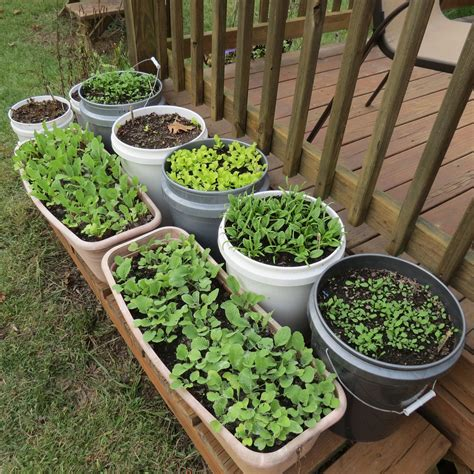 how to make a container vegetable garden how to start vegetable gardening in a small backyard