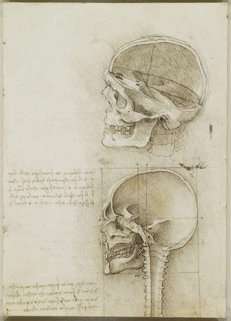 tavola anatomica anatomia cranio leonardo modellianatomici it