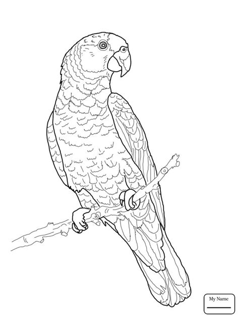 coloring pages canary bird canary bird outline coloring pages pet bird coloring page