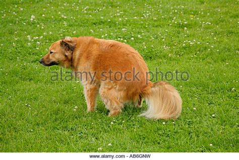 constipated puppy 8 weeks stock photos stock images alamy
