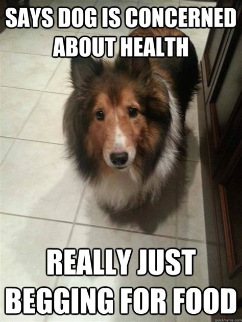 Dog Cooking Meme - says dog is concerned about health really just begging for