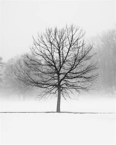 black and white tree images 25 best ideas about black and white tree on