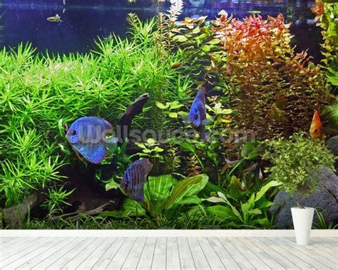 aquarium wall mural aquarium with discus fish wallpaper wall mural wallsauce
