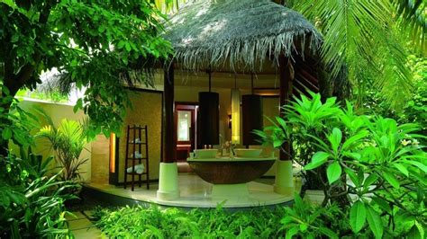 beautiful house in the jungle home and garden
