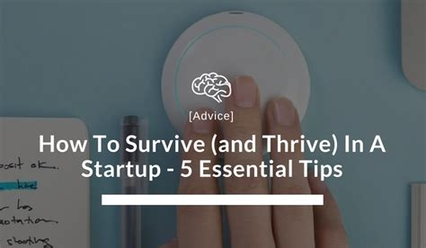 how to survive and thrive in a startup risehigh blog