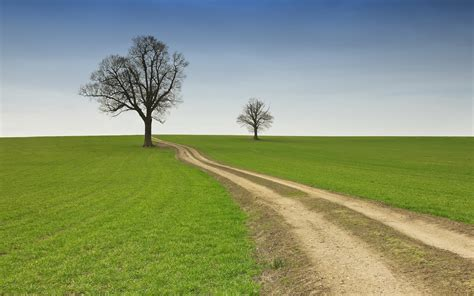 sky path trees grass field wallpapers sky path trees