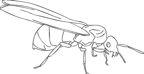 Queen Ant Coloring Page | free printable ant coloring pages for kids
