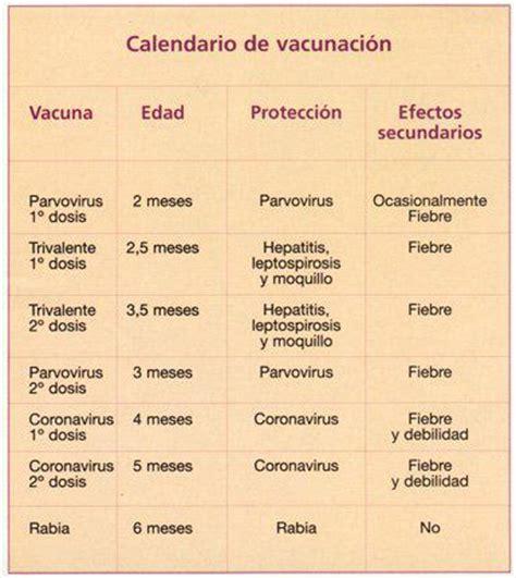 Calendario Y Sus Animales Calendario De Vacunaci 243 N Perruno Perros Pugperros Pug