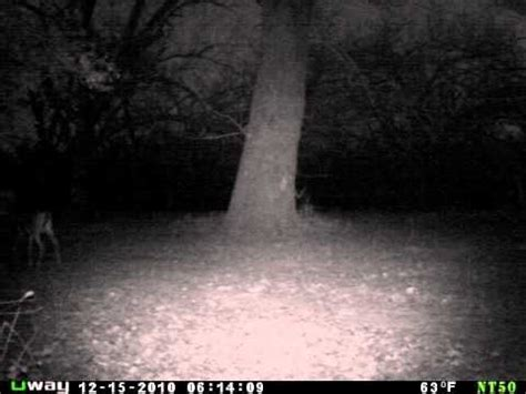 creepy mutant weird strange deer filmed by uway nt50 trail