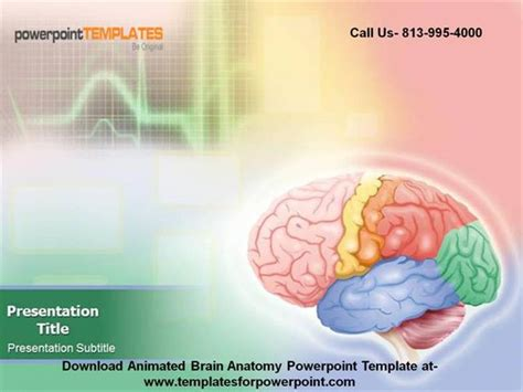 template ppt free brain animated brain anatomy powerpoint template authorstream