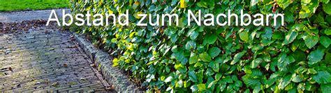 Ab Wann Hecke Schneiden by Tipps Tricks F 252 Rs Hecke Schneiden Wann Wie