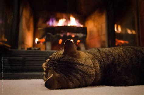 By The Fireplace by Tabby Cat Soaking Up Heat By The Fireplace By Brian