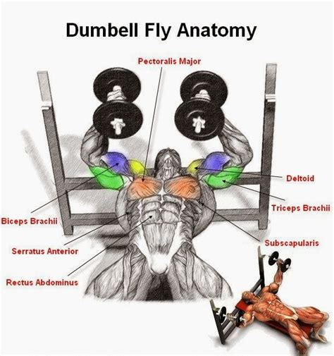 Dumbell Fitness And Fitness Tips Dumbell Flyes Exercise