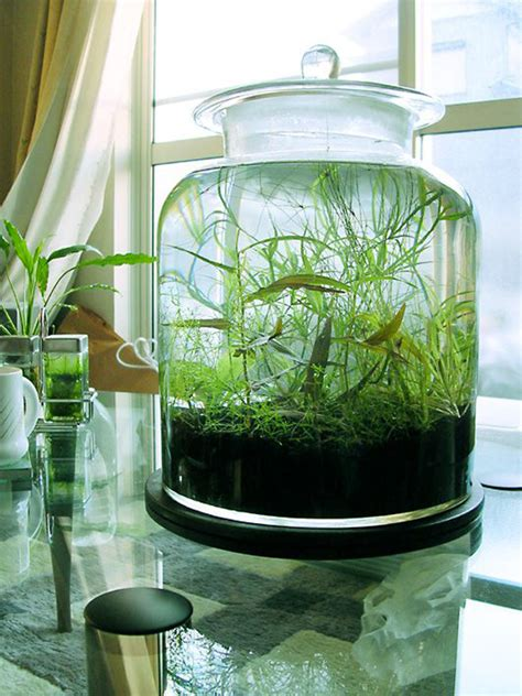 image gallery indoor water garden
