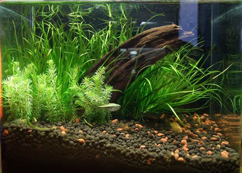 best substrate for aquascaping best substrate for aquascaping best substrate for