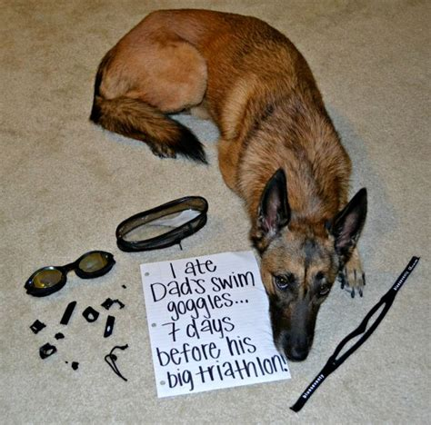 my dog isn t eating what s wrong badly behaved dogs named shamed and made to wear a sign