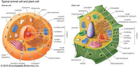 organelles  cells  images sammoor storify